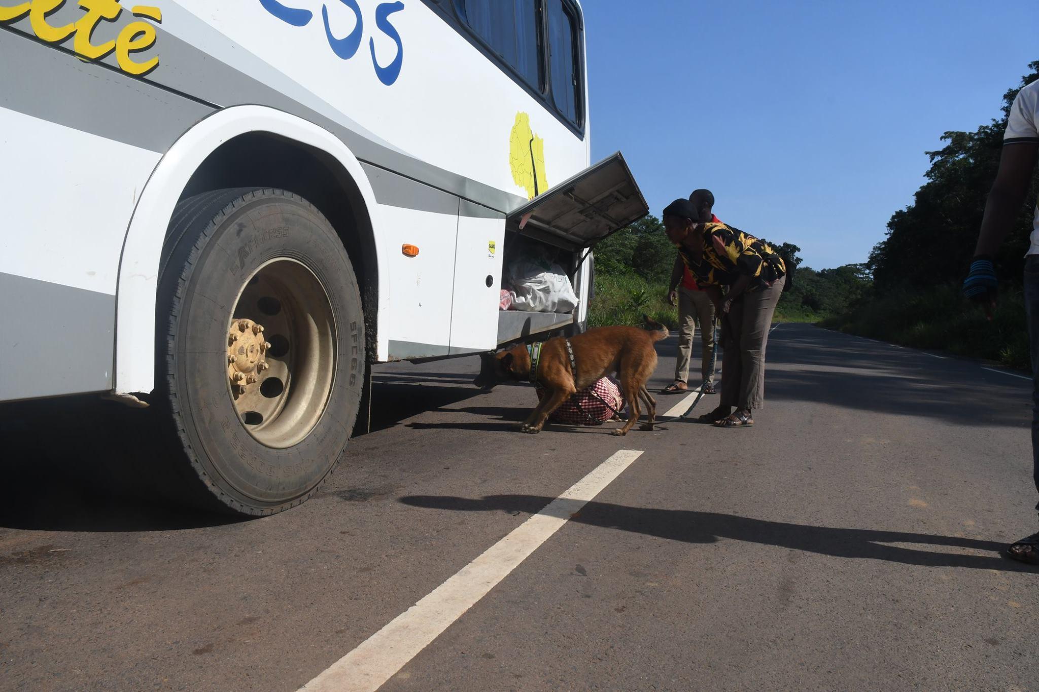Připravujeme psy pro boj s pašeráky v Africe....